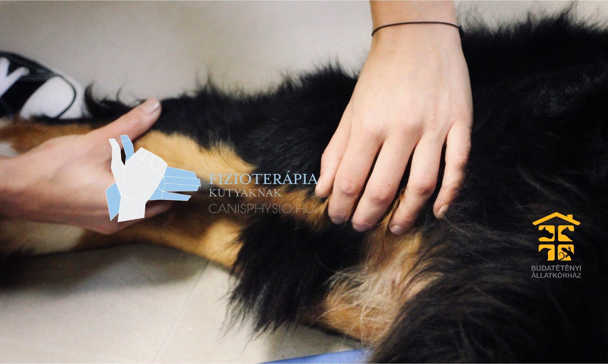 Kutya-fizioterápia | CanisPhysio